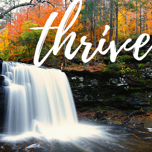 The Fall leaves change into dynamic colours as the water pours over the ledge of rocks.